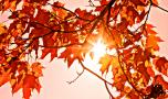 Abnormal Autumn: temperature records tumble again